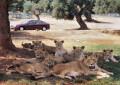 Alla scoperta dello Zoo Safari di Fasano.